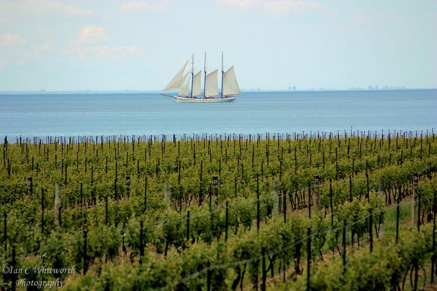 Tall ship passes a vineyard at Niagara on the Lake