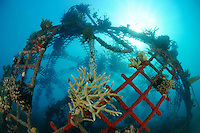 "Global Coral Reef Alliance,  ""Das Projekt"", schoen bewachsenes kuenstliches Riff, Artificial reef full of corals and sponges, Global Coral Reef Alliance, Pemuteran, Bali, Indonesien, Indopazifik, Bali, Indonesia Asien, Indo-Pacific Ocean, Asia"