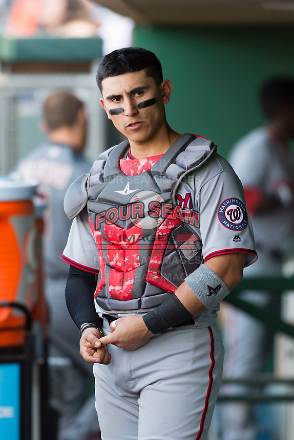 Salt River Rafters catcher Tres Barrera (12), of the Washington Nationals organization, in the dugout during the Arizona Fall League Championship Game against the Peoria Javelinas at Scottsdale Stadium on November 17, 2018 in Scottsdale, Arizona. Peoria defeated Salt River 3-2 in 10 innings. (Zachary Lucy/Four Seam Images)