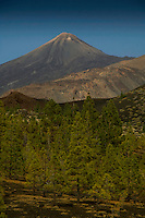 Mount Teide with pine trees in the foreground , Tenerife, Canary islands, Spain,