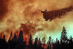 August 19, 1992 Angels Camp, California -- Old Gulch Fire— Air tanker drops retardant near Northwood Estates subdivision.  The Old Gulch Fire raged over some 18,000 acres, destroying 42 homes while threatening the Mother Lode communities of Murphys, Sheep Ranch, Avery and Forest Meadows.