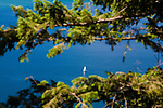 A distant sailboat on Flathead Lake is viewed between tree branches