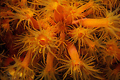Coral polyps blooming at night