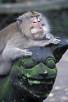 Monkey Resting on Statue in Monkey Forest, Ubud, Bali