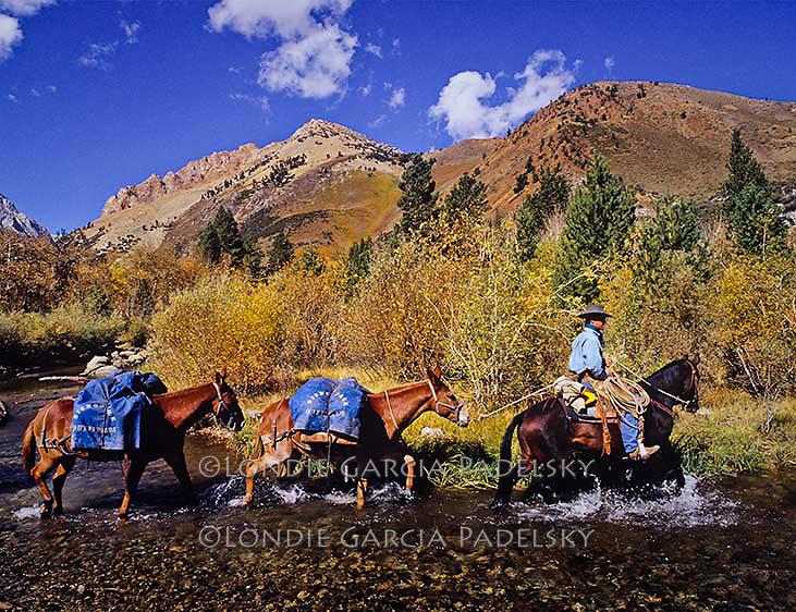 Cowboy leading pack mules in the high Sierra at Bishop Creek, California