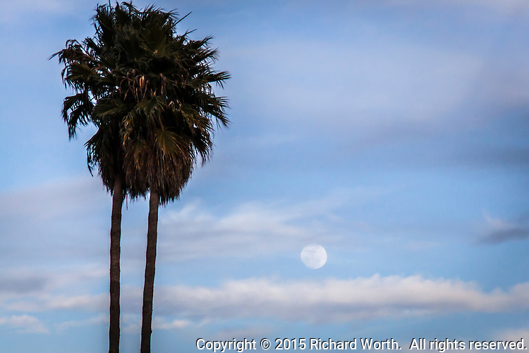 Sliding up between the clouds and next to a palm tree, the gibbous moon, two days from full, rises over the San Leandro Marina along San Francisco Bay.
