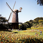 The Queen Wilhelmina Tulip Garden in Golden Gate Park is just adjacent to the Dutch Windmill and is a riot of color with over 10,000 tulip bulbs planted each October.