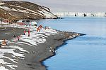 Penguin Colony at Brown Bluff, Antarctic Sound, Antarctica