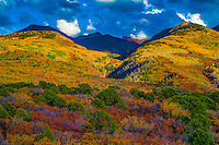 Oaks and aspens, La Sal Mountains, Utah Manti-La Sal National Forest   Gambel oak and quaking aspen Populus tremuloides