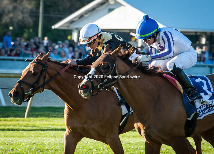 February 8, 2020: Admiralty Pier, ridden by Samy Camacho, wins the 2020 running of the G3 Tampa Bay Stakes at Tampa Bay Downs in Oldsmar, FL. Sophie Shore/ESW/CSM