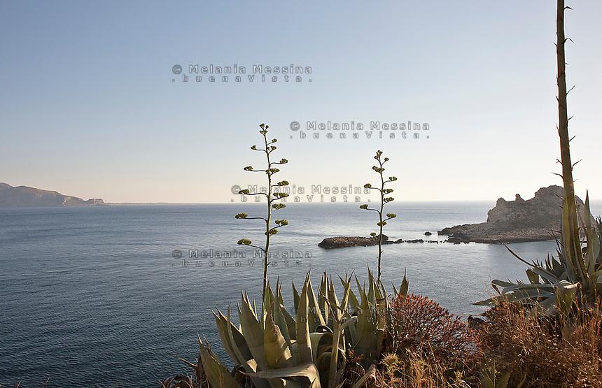 Le agavi del lungomare di Levanzo con i faraglioni e Favignana sullo sfondo.<br /> Agaves in Levanzo island, with Favignana and sea stacks in the background.