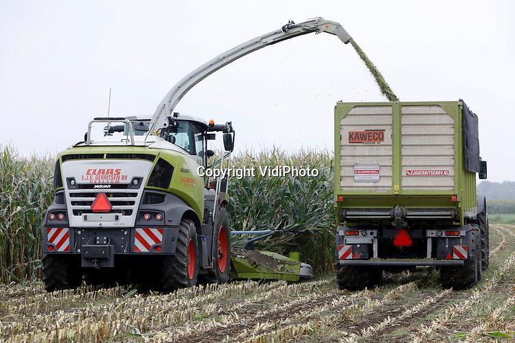 """Foto: VidiPhoto<br /> <br /> ELST – In de Betuwe is de maïsoogst dinsdag volop aan de gang, zoals hier bij melkveehouder Harold Willemsen in Elst Gelderland. In totaal heeft Willemsen 12 ha. mais dat wordt gehakseld, ingekuild en in de winter gebruikt als veevoer voor zijn 90 melkkoeien. Dat is hard nodig, want door de droogte is de grasopbrengst dit jaar fors minder. Volgens loonwerker Jan Gerritsen uit Heelsum is de maïsopbrengst daarentegen dit jaar """"goed tot zeer goed"""", ondanks het droge voorjaar. """"Juist daardoor hebben de stengels een goede beworteling gekregen en heeft de groei ook in de droge zomer doorgezet. Maïs is bovendien een tropische plant."""""""