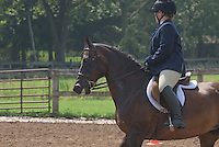 Rookie English Equitation