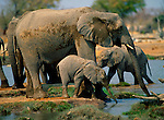 An adult and young elephant drink from the Okakueo Water Hole in Etosha National Park, Namibia.