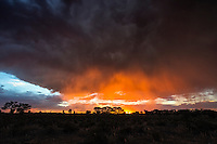 A rain shower is coloured orange when the setting sun dips below a dark kalahari storm cloud.