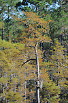 A few images from the Sandhill Crane Refuge located near Ocean Springs, MS.