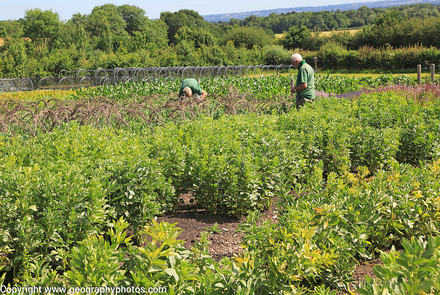 Volunteer workers in the vegetable garden, Sissinghurst castle gardens, Kent, England, UK