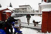 Work of a 60-years old Polish postman Jacek Szczerba in snow covered Piaseczno in central Poland. Jacek is celebrating 40-th anniversary of his work as a postman..January 2010.(Photo by Piotr Malecki / Napo Images)..Praca listonosza. Jacek Serkiew wlasnie obchodzi czterdziestolecie pracy na tym stanowisku. .Piaseczno, Styczen 2010.(Photo by Piotr Malecki / Napo Images) ..