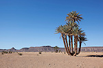 Desert landscape with date palms and mountains near Tagounite, Sahara desert, Morocco.
