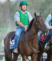 Got Shades, trained by Danny Pish, trains for the Breeders' Cup Juvenile Turf at Santa Anita Park in Arcadia, California on October 30, 2013.