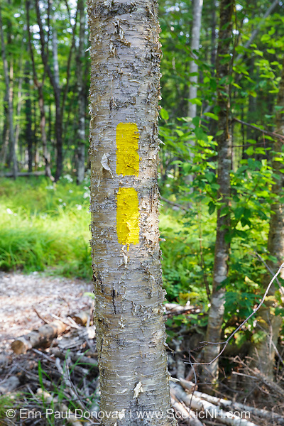 Yellow trail blaze along a trail at the Warren Town Forest in Warren, New Hampshire during the summer months. The double blaze indicates a change in direction of the trail.