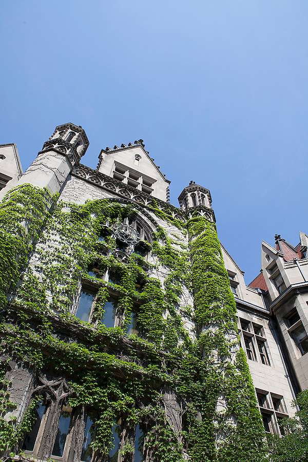 Cobb Hall, Gothic architecture, covered in ivy, University of Chicago campus, Chicago, Illinois, IL, USA