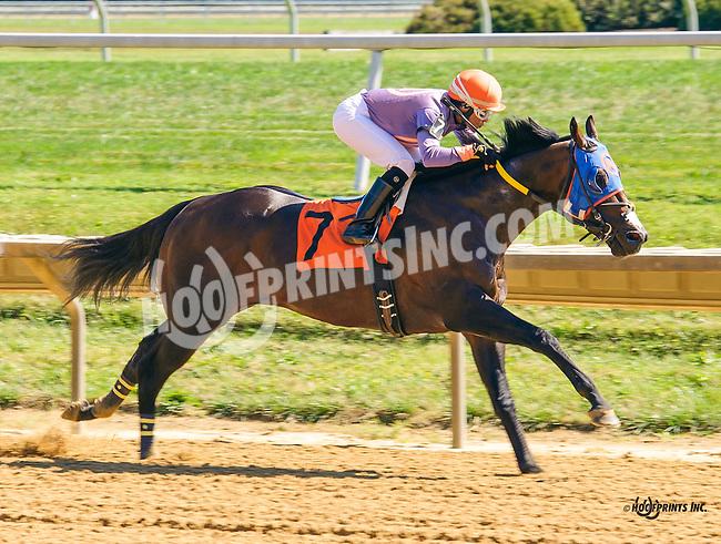 Chicago Son winning at Delaware Park on 9/22/16