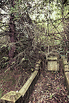 A neglected grave overgrown with trees