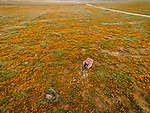 Selfie with a big, stuffed and abandoned easy chair in a poppy field from a DJI drone above, Antelope Valley, Calif.