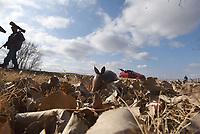 NWA Democrat-Gazette/FLIP PUTTHOFF <br /> A young armadillo forages Dec. 12 2018 under leaves beside a parking area at Sequoyah National Wildlife Refuge.