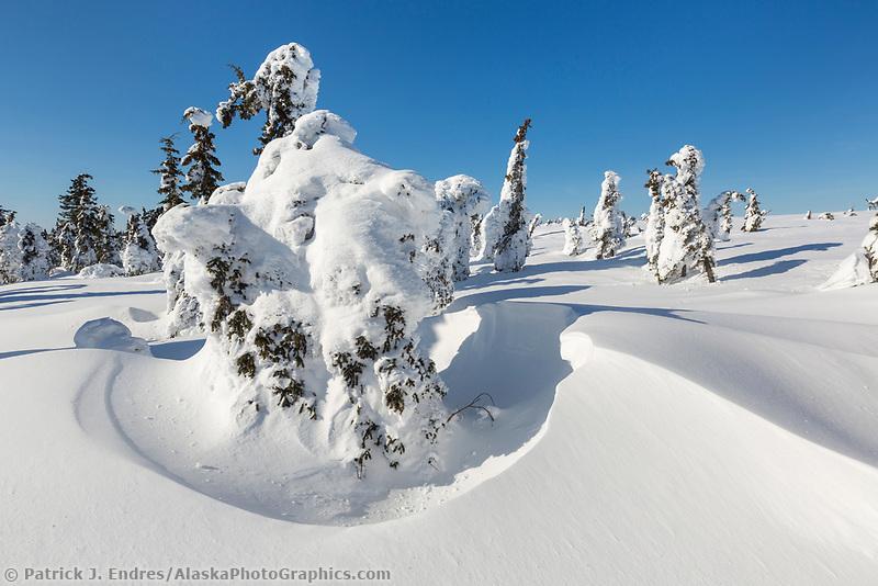 Wind blows snow around spruce trees on the tundra, Alaska.
