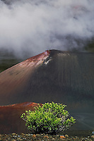 The often present clouds in the crater highlight the cinder cones and Kupaoa plant in HALEAKALA NATIONAL PARK on Maui in Hawaii