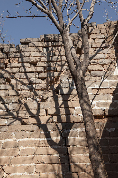 A tree within the crumbling tower along Jiankou Great Wall.