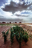 Hong Si Pu Resettlement Farmland, Zhong Ning, Ning Xia, China. The drought prone area has an irrigation network for it's crops.<br /> 10-NOV-00
