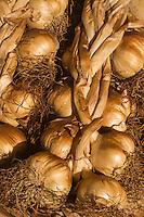 France, Nord (59), Bergues: Jour de marché, Ail fumé d'Arleux //  France, Nord, Bergues:  Market Day, Arleux smoked garlic,
