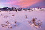 Yellowstone National Park, Wyoming: Dawn light in the Lamar Valley with snow covered sage