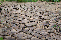 Flaking dry alluvial silt soil follwing heavy rainfall - Lincolnshire, August