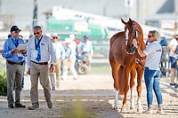 BEL-Jos Verlooy's Igor is presnted during the 2nd Horse Inspection for the FEI World Individual Jumping Championships. 2018 FEI World Equestrian Games Tryon. Saturday 22 September. Copyright Photo: Libby Law Photography