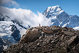 NEW ZEALAND, Aoraki Mount Cook National Park, A Woman Hikes in front of Mount Cook on the Mueller Track,  Ben M Thomas