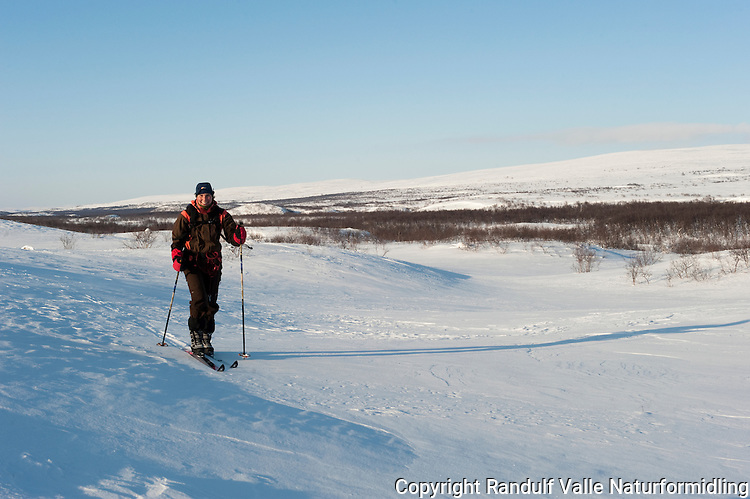 Dame går på ski øverst i stabbursdalen. ---- Woman skiing in Sabbursdalen.
