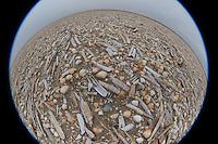 Muschelschalen am Strand, Spülsaum, Schale, Muschelschale, Schill, Muschelschill, Herzmuscheln und Scheidenmuscheln und andere Arten, Wattenmeer, Nordsee, Fisheye