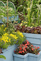Corn, lettuce, edible landscaping with flowers