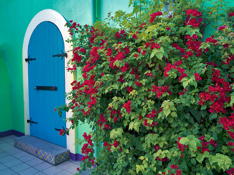 Store front doors with Bouganvilla. St. John. Virgin Slands St. John. Virgin Islands.