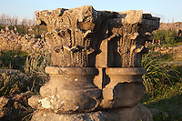 Corinthian capitals on column bases along the Decumanus Maximus or Main Street, Volubilis, Northern Morocco. Volubilis was founded in the 3rd century BC by the Phoenicians and was a Roman settlement from the 1st century AD. Volubilis was a thriving Roman olive growing town until 280 AD and was settled until the 11th century. The buildings were largely destroyed by an earthquake in the 18th century and have since been excavated and partly restored. Volubilis was listed as a UNESCO World Heritage Site in 1997. Picture by Manuel Cohen
