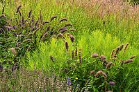Garden flowers and grass