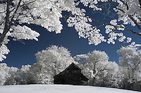 An old barn photographed in infrared on a farm in Albemarle County, Va. Photo/Andrew Shurtleff