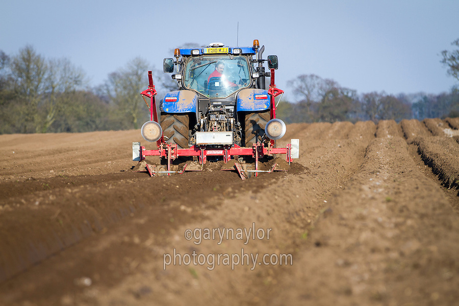 Preparing ridges ahead of destoners - March, Norfolk