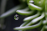 Water Drop on Evergreen<br /> <br /> After the storm, there were drops help up by thin threads of spiderweb.