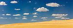 Palouse wheatfield under cloud dotted skies, Washington, USA