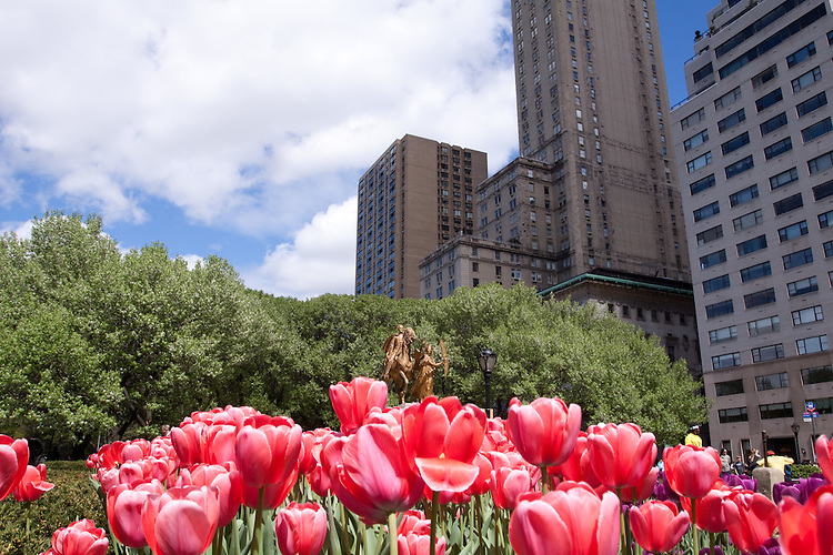 Red Tulips in Central Park